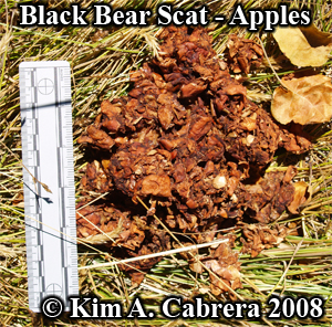 Black bear scat or poop. Photo copyright by Kim A. Cabrera 2008.