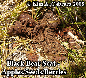 Black bear scat from seeds berries apples. Photo copyright by Kim A. Cabrera 2008.