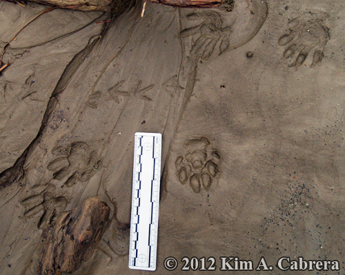 many                     species tracks