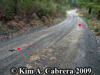 coyote scat locations. Photo copyright by Kim A.                   Cabrera 2009.