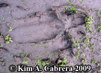 Dog track showing slip. Photo copyright Kim A. Cabrera