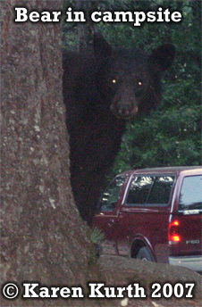 black bear visiting a campsite. Photo copyright by Karen Kurth 2007.