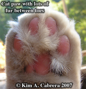 Furry cat paw. Boots the cat's foot. Photo copyright by Kim A. Cabrera 2007.