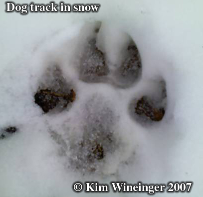 Dog track in snow. Photo copyright by Kim Wineinger 2007.