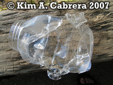 Black bear feeding on a jelly jar. Photo copyright by Kim A. Cabrera 2007.