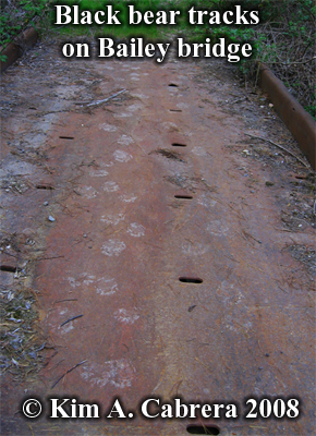 Tracks of a mother bear and two cubs crossing a bridge. Photo copyright Kim A. Cabrera 2008.