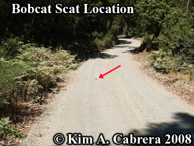 Location of scat deposit on dirt road. Good bobcat habitat area. Photo copyright by Kim A. Cabrera 2008.