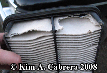 Air filter shredded by mouse gathering nest material. Photo copyright Kim A. Cabrera 2008.