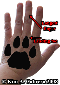 Big Cat Dogs Cross Footprints