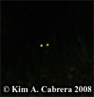 Deer eye shine at night. Photo copyright Kim A. Cabrera 2008.