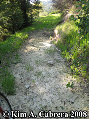 Mountain lion habitat. The dried mud where the above footprints were found. Photo copyright Kim A. Cabrera 2008.