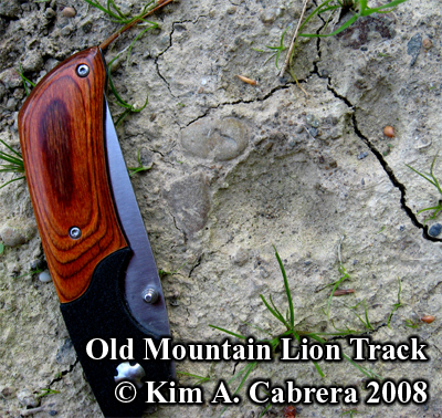 Partial Cougar track in dried mud. Photo copyright Kim A. Cabrera 2008.