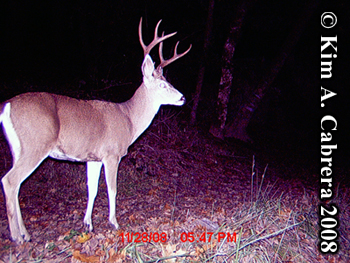 Buck at night. Photo copyright Kim A. Cabrera 2008.