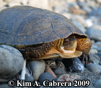 turtle in sunset. Photo copyright Kim A. Cabrera.